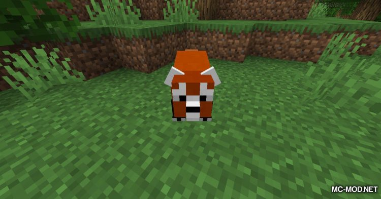 Red Pandas mod for Minecraft (1)