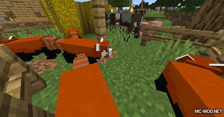 Red Pandas mod for Minecraft (6)